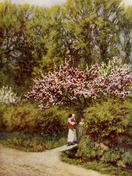 Happy England Painted and Described - Apple and Pear Blossom (1909)