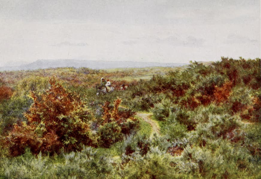 Happy England Painted and Described - Blackdown from Witley Common (1909)