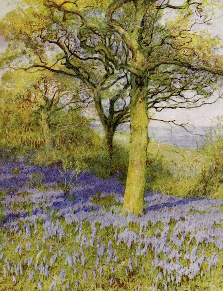 Happy England Painted and Described - Spring in the Oakwood (1909)