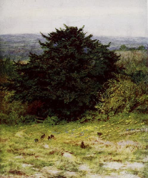 Happy England Painted and Described - The Old Yew Tree (1909)