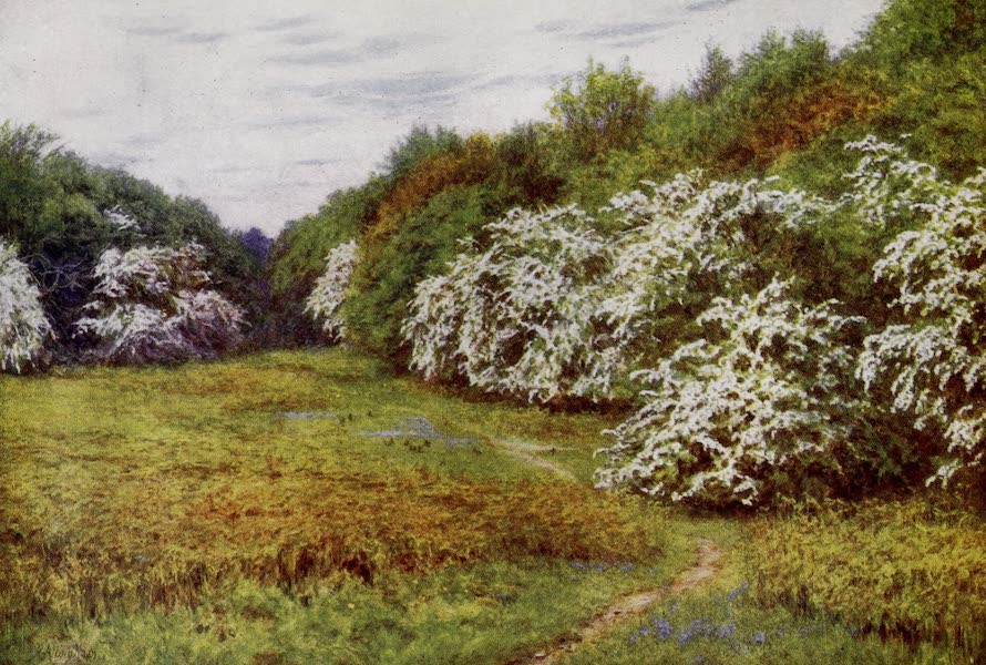Happy England Painted and Described - The Hawthorn Valley, Brocket (1909)