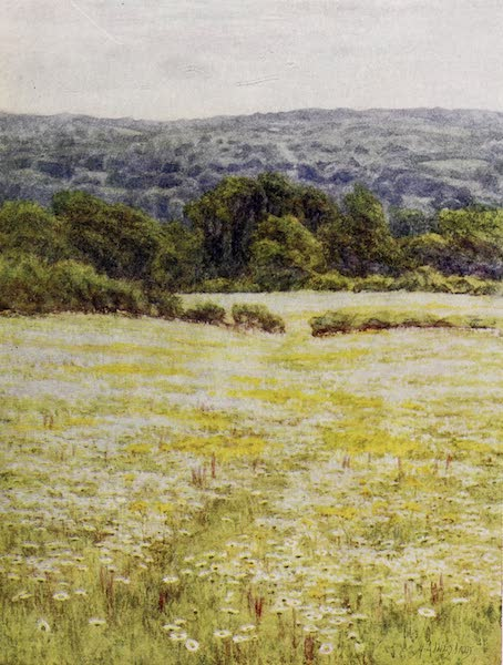 Happy England Painted and Described - Ox-eye Daisies, near Westerham, Kent (1909)