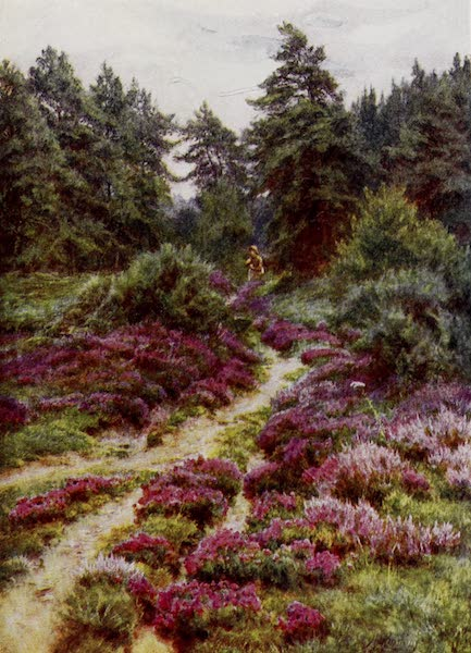 Happy England Painted and Described - Heather on Crockham Hill, Kent (1909)