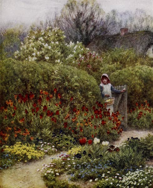 Happy England Painted and Described - Wallflowers (1909)
