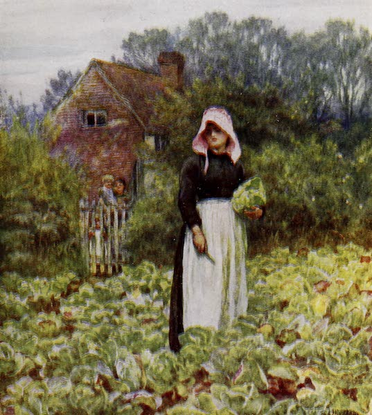 Happy England Painted and Described - Cutting Cabbages (1909)