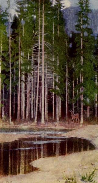 Hungary, Painted and Described - Pines in the Tatra (1909)