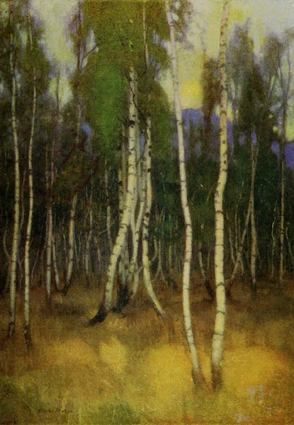 Hungary, Painted and Described - Birches at Lucsivna-Furdo (1909)