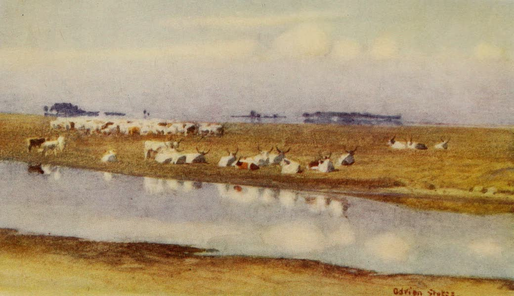 Hungary, Painted and Described - Cattle on the Puszta of Hortobagy (1909)