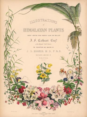 Aquatint & Lithography - Illustrations of Himalayan Plants