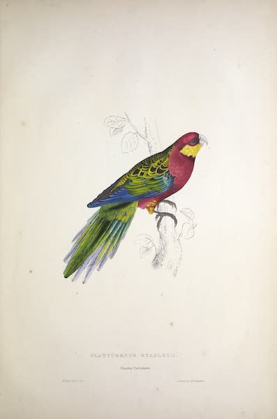 Illustrations of the Family of Psittacidae, or Parrots - <i>Platycercus stanleyii</i> - Stanley Parrakeet (1832)
