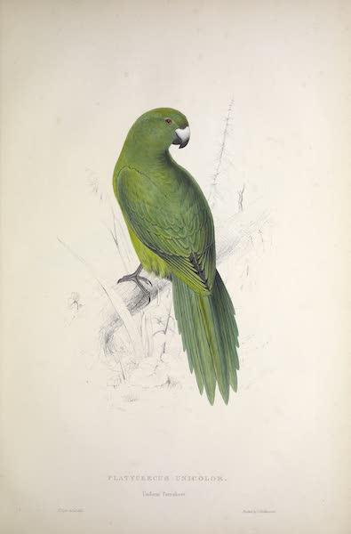 Illustrations of the Family of Psittacidae, or Parrots - <i>Platycercus unicolor</i> - Uniform Parrakeet (1832)