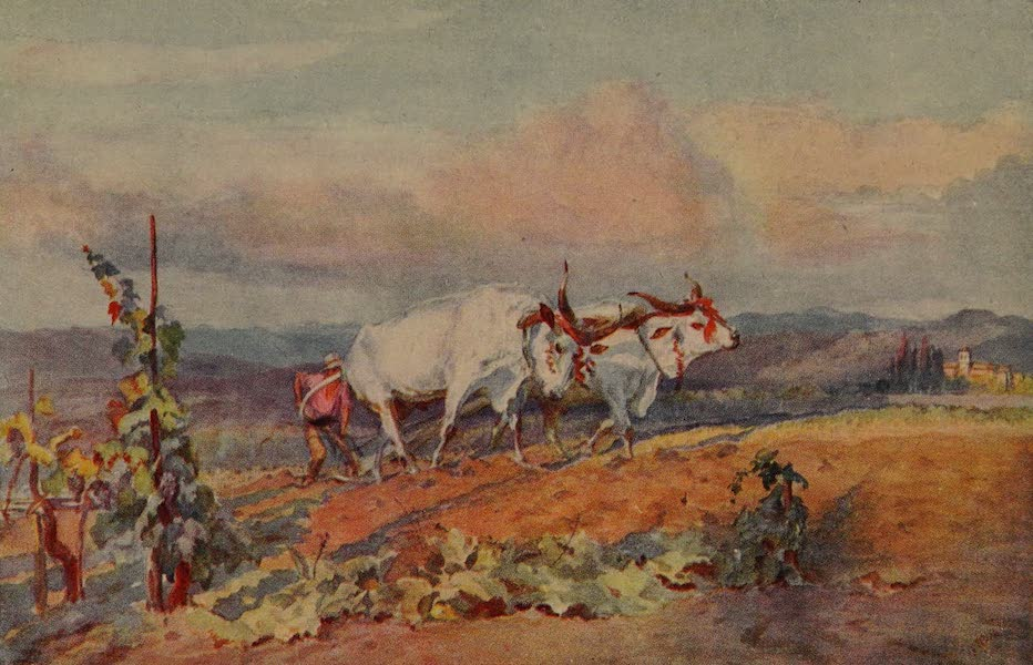 Italy - Ploughing with Oxen in Tuscany (1913)