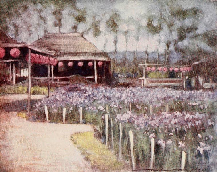 Japan : A Record in Colour - Iris Garden (1901)