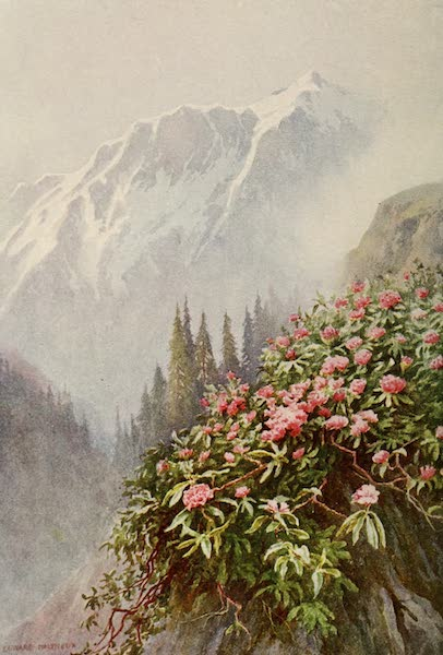 Kashmir, Painted and Described - Wild Rhododendrons (1911)