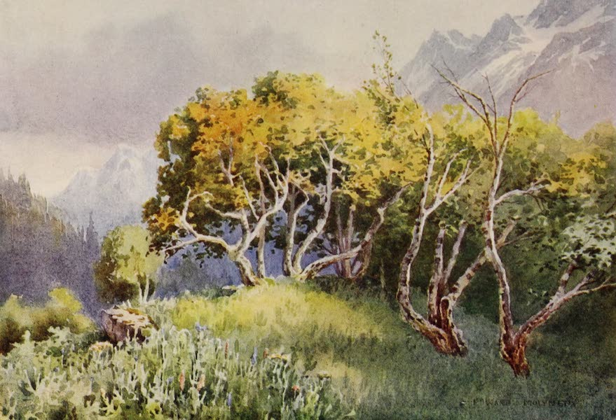 Kashmir, Painted and Described - Above the Camping-Ground, Sonamarg, Sind Valley (1911)