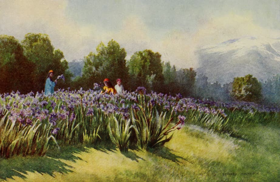 Kashmir, Painted and Described - Spring in Kashmir (1911)