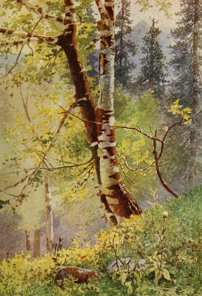 Kashmir, Painted and Described - In the Forest (1911)