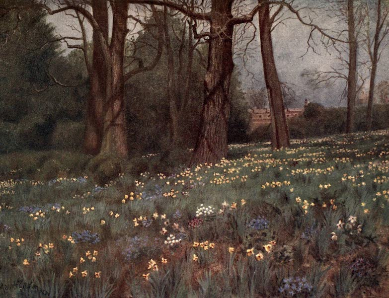 Kew Gardens, Painted and Described - The Wild Garden in Spring (1908)