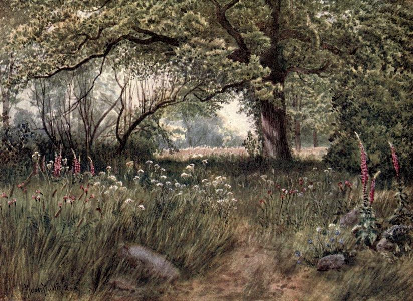 Kew Gardens, Painted and Described - In Queen's Cottage Gardens (1908)