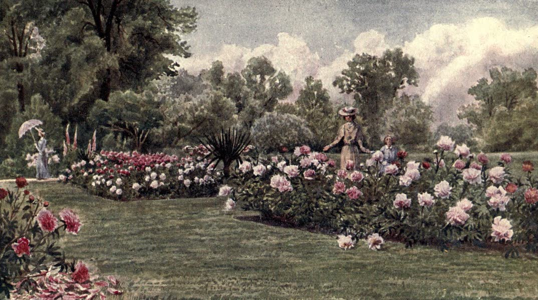 Kew Gardens, Painted and Described - The Peonies (1908)