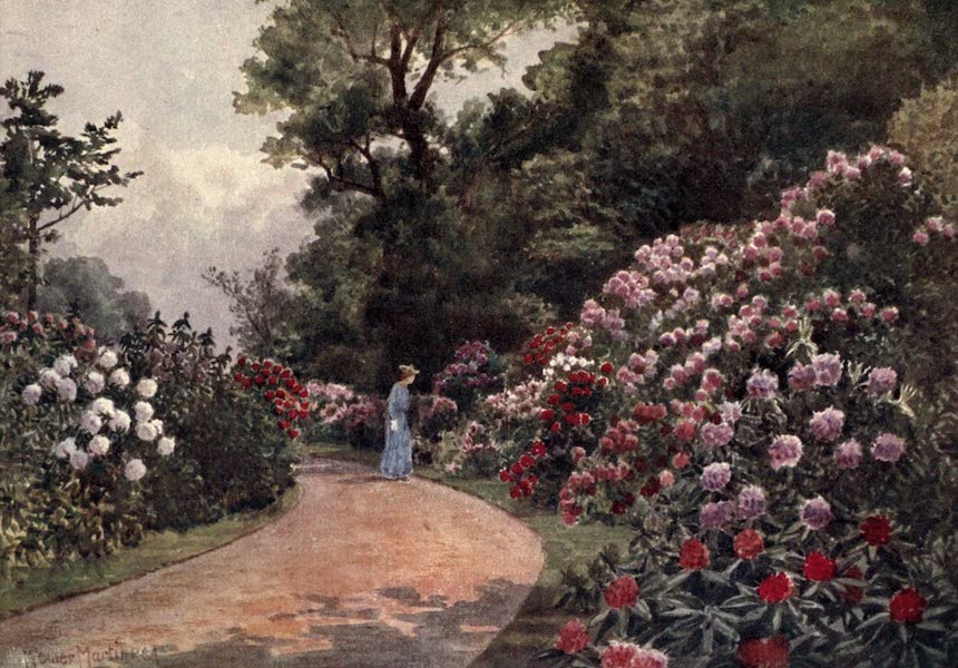 Kew Gardens, Painted and Described - The Rhododendron Walk (1908)