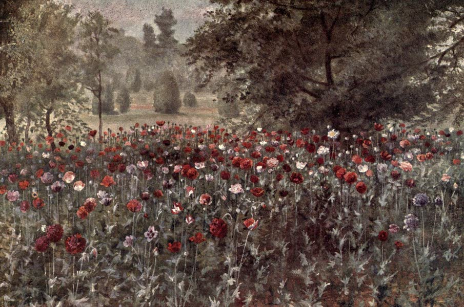 Kew Gardens, Painted and Described - The Poppy Beds (1908)