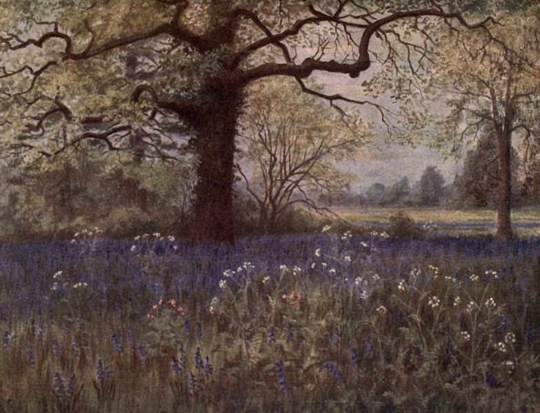 Kew Gardens, Painted and Described - Wild Hyacinths (1908)