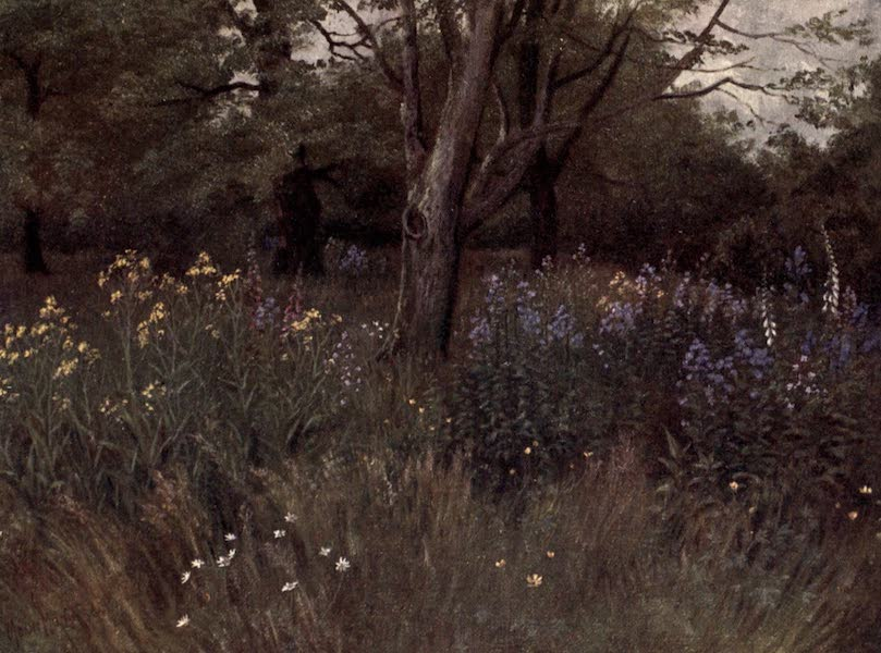 Kew Gardens, Painted and Described - Wild Flowers in the Beech Woods (1908)