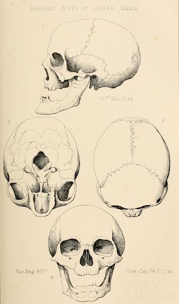 Ladak, Physical, Statistical, and Historical - Nomadic Boti of Ladak, Hanle (1854)