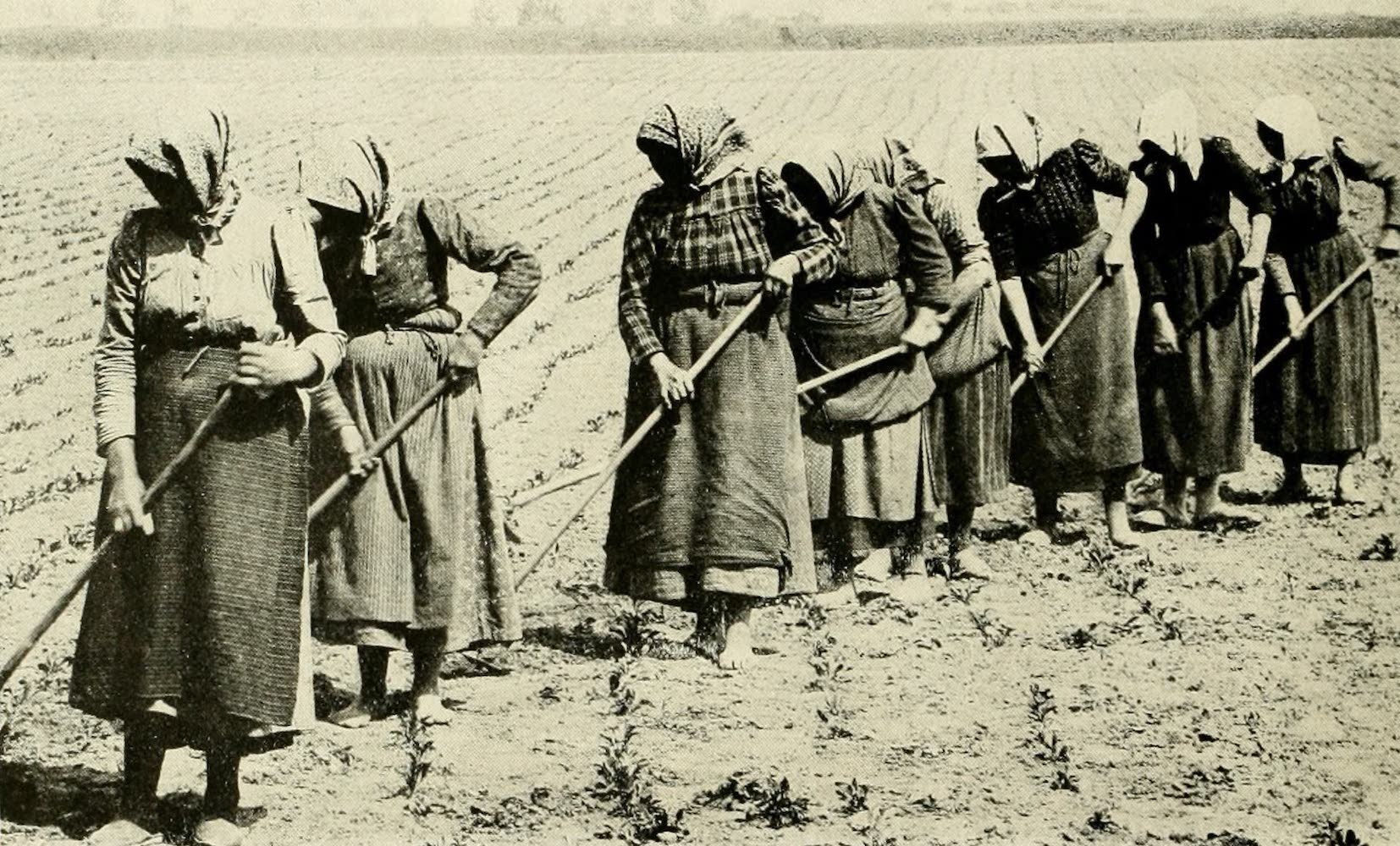 Laird & Lee's World's War Glimpses - Beet Sugar Workers, in Germany (1914)
