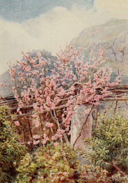Lamia's Winter-Quarters - Peach-trees ablow' (1907)