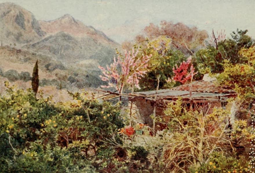 Lamia's Winter-Quarters - Orange Grove, Mentone (1907)