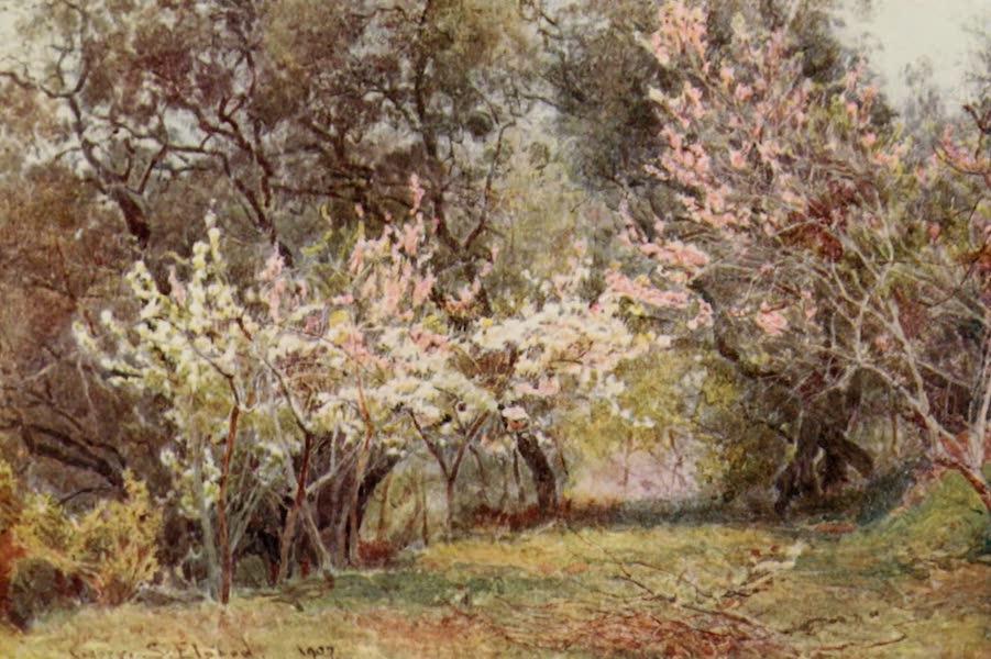 Lamia's Winter-Quarters - Peach, Plum, and Pear-blossom (1907)