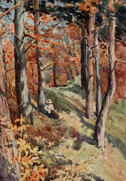 Lausanne, Painted and Described - In the Forest of Sauvabelin, above Lausanne (1909)