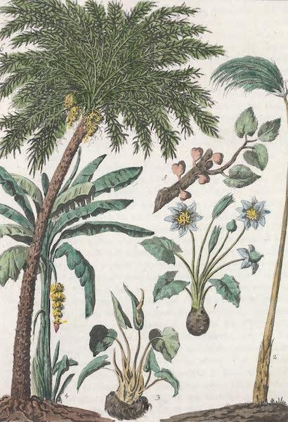 Le Costume Ancien et Moderne [Afrique] Vol. 1 - Vegetaux (1815)