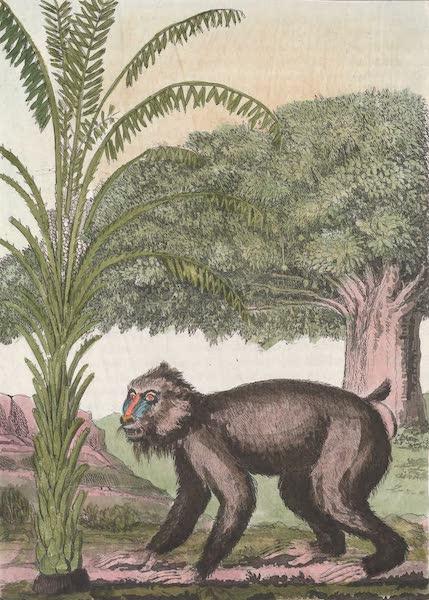 Le Costume Ancien et Moderne [Afrique] Vol. 2 - Vegetaux - le baobab, l'arbre schea etc (1819)