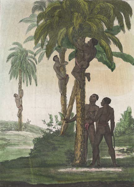 Le Costume Ancien et Moderne [Afrique] Vol. 2 - Negres qui grimpent sur les arbres (1819)