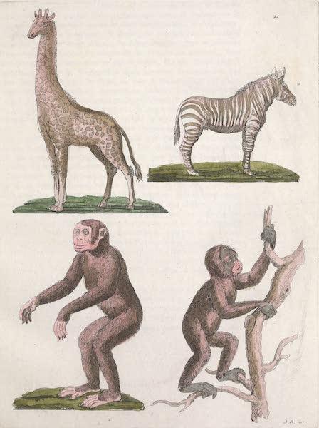 Le Costume Ancien et Moderne [Afrique] Vol. 2 - Animaux [II] (1819)