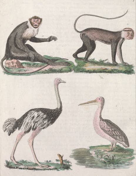 Le Costume Ancien et Moderne [Afrique] Vol. 2 - Animaux (1819)