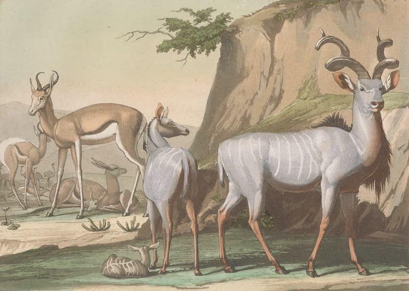 Le Costume Ancien et Moderne [Afrique] Vol. 2 - Animaux - Antelopes [I] (1819)