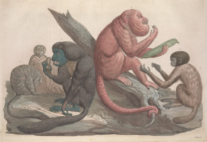 Le Costume Ancien et Moderne [Amerique] Vol. 2 - Singes de la Guyanne Espagnole (1821)