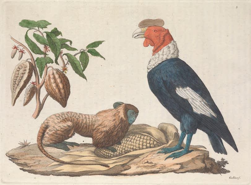Le Costume Ancien et Moderne [Amerique] Vol. 2 - Singe Leonina, le Condor etc (1821)
