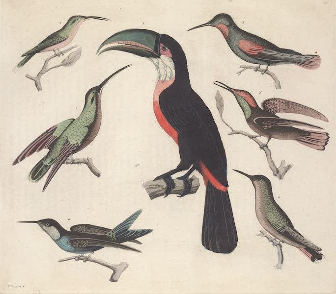 Le Costume Ancien et Moderne [Amerique] Vol. 2 - Oiseaux (1821)