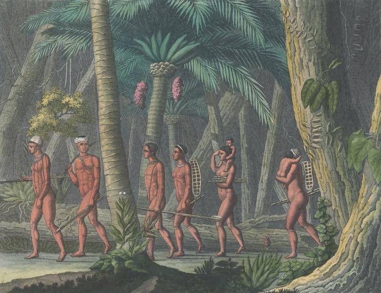 Le Costume Ancien et Moderne [Amerique] Vol. 2 - Puris dans leurs forets (1821)
