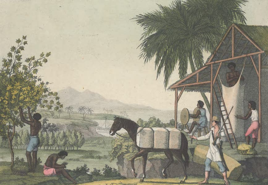 Le Costume Ancien et Moderne [Amerique] Vol. 2 - Maniere de perparer le coton (1821)