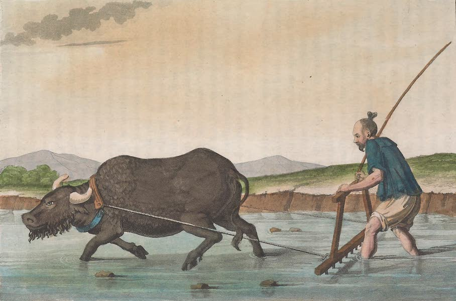 Le Costume Ancien et Moderne [Asie] Vol. 1 - Herse trainee par un buffle (1815)