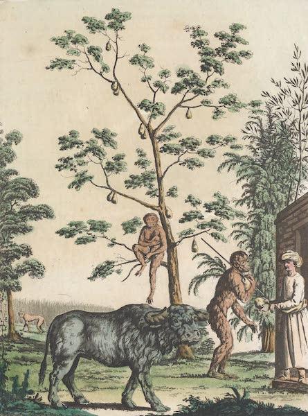 Le Costume Ancien et Moderne [Asie] Vol. 2 - Vegetaux et animaux, seneve, cochenille, jacquier, bufle, orang-outang etc (1817)