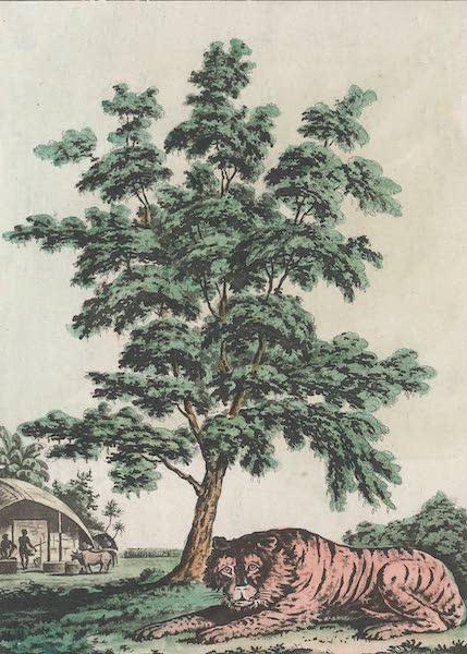 Le Costume Ancien et Moderne [Asie] Vol. 2 - Tamarinde, tigre, etc (1817)