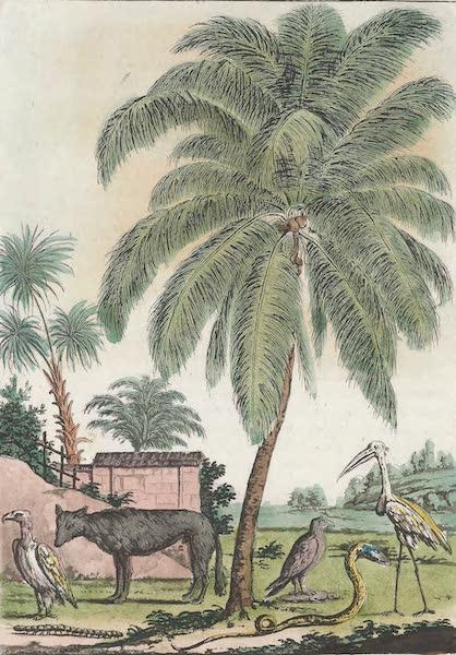 Le Costume Ancien et Moderne [Asie] Vol. 2 - Cocotier, Chacal, Cobra de capello, Solitaire etc (1817)