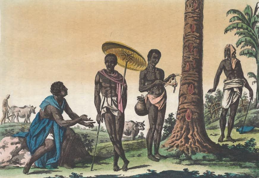 Le Costume Ancien et Moderne [Asie] Vol. 2 - Cultivateur, Jardinier, Bouvier etc (1817)